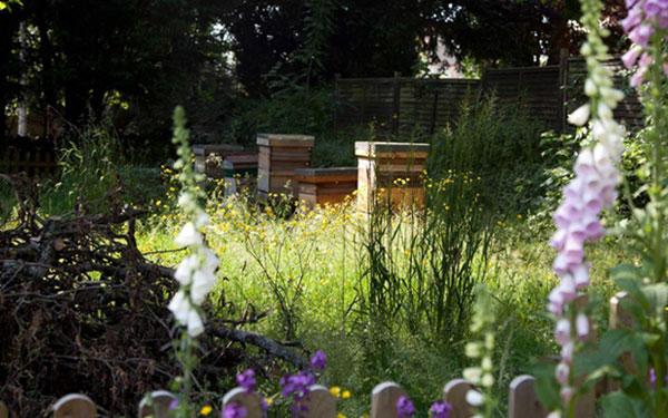 Wildflower gardens at a Quaker school